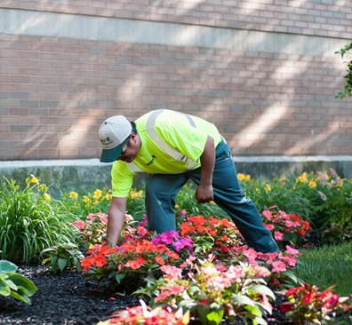 """Ready to see some pops of color in your landscape this season? """"Spring"""" ahead and jump start your landscape prep as winter's woes wash away."""