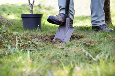 Learn how to test if it is too late to plant a tree this fall. Review steps you can take to care for your newly planted tree.