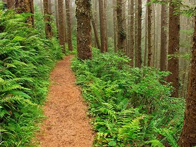 sitka spruce forest