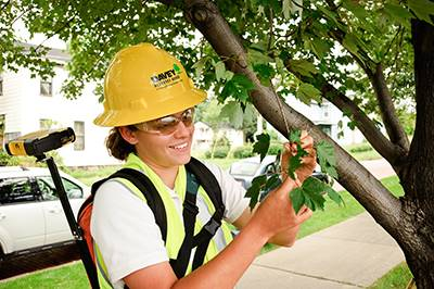 Davey Resource Group street tree inventory