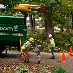 davey tree services