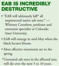 EAB facts