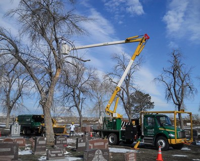 Davey volunteers bring bucket trucks to Riverside Cemetery to safely access the tree canopies onsite.