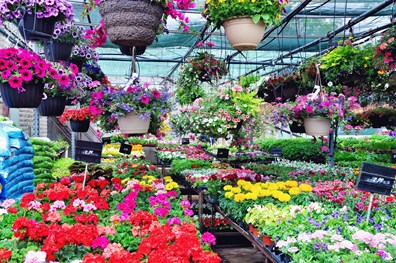 Look for bright, bold colors when choosing which annuals to purchase. Plant big blocks of bold-colored annuals to create striking spring and summer visuals in your landscape.