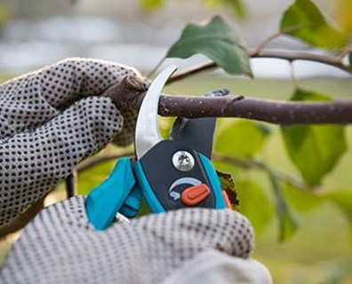 Thinning out your trees' dead and disease-ridden branches creates air flow within the canopy, which helps prevent leaf disease issues and fungal infections.