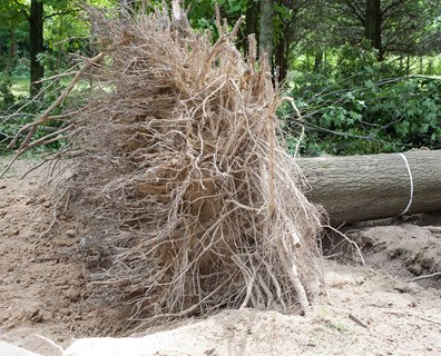 Don't let severe storm damage bring you--and your trees--down. Follow some of Davey District Manager Miles Stephens' monitoring tips below to help keep your green investments as safe as possible this season.